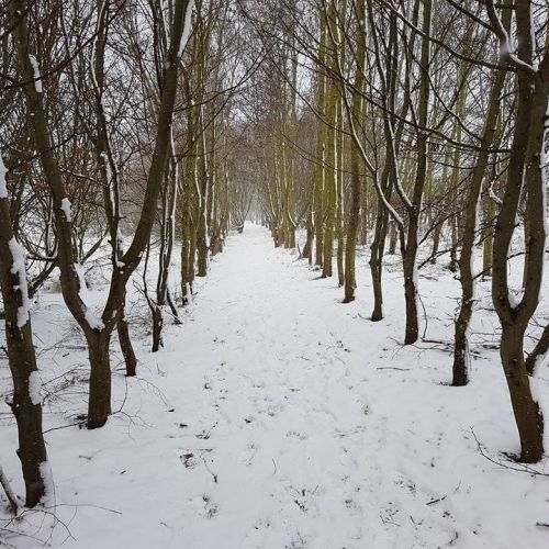 Jubilee Path in winter